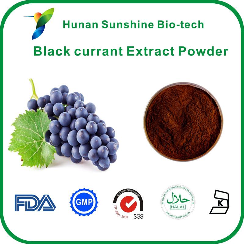 Black currant extract powder