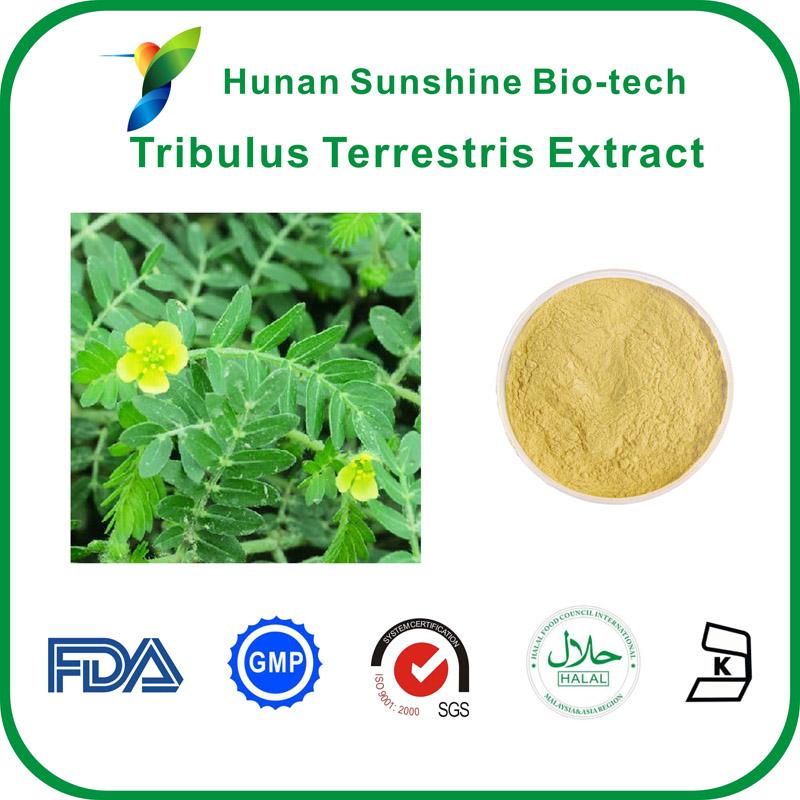 Tribulus Terrestris Extract,40% Saponins,Tribulus terrestris L., Sertoidal Saponins