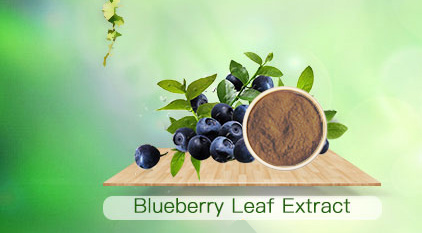 Plant extracts-herbal extracts-fruits powder-manufacturer-wholesale-reishi mushroom extract-sulforaphane-Sponge spicule-ginseng root extract